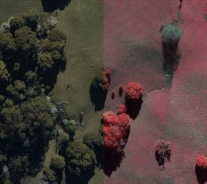 Near-Infrared Imagery - Combined