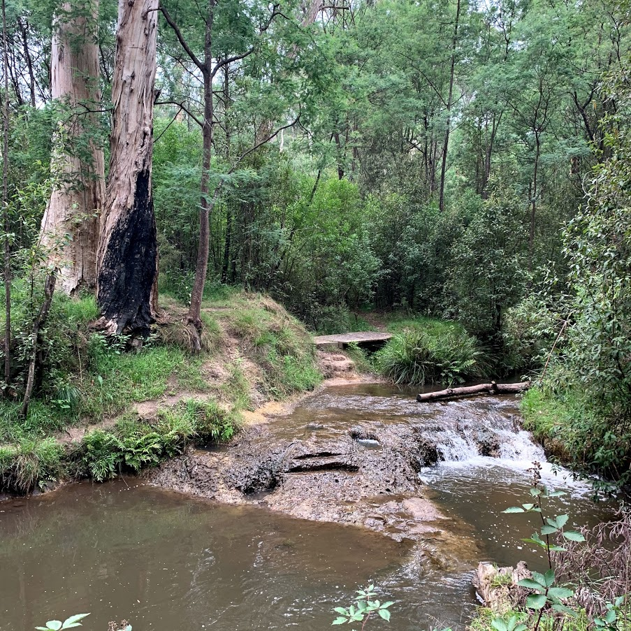 Re-Establishment Survey for Yarra Ranges Council Walking Track Scenery